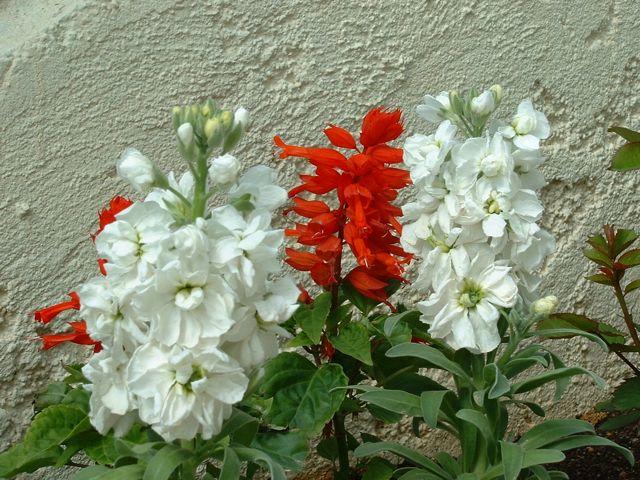 spring-2006-14.jpg